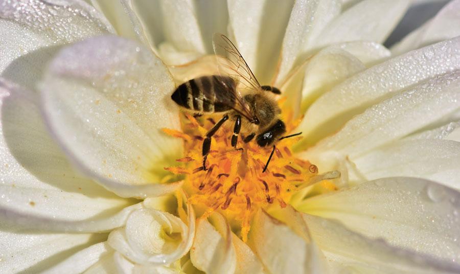 Bin är viktiga pollinatörer.