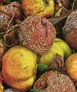 Mögliga äpplen - konservering bevarar mat och dryck