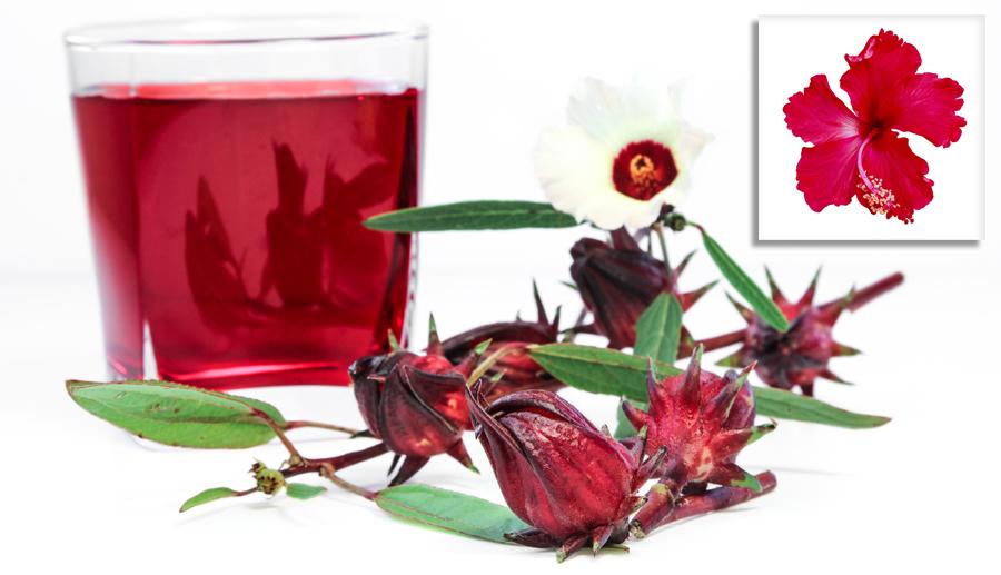 Hibiskus - rosellhibiskus - dryck